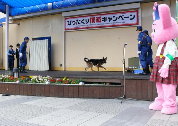 警察犬によるひったくり犯人臭気追跡